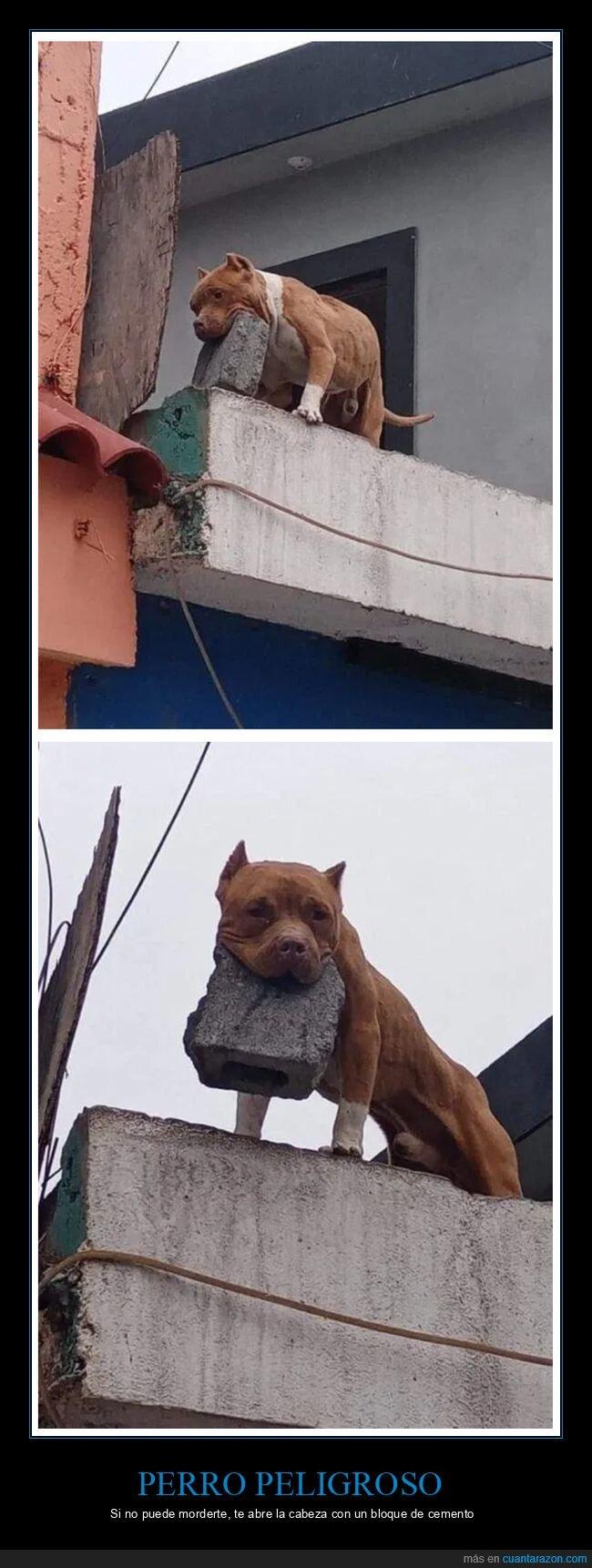 bloque de cemento,perros,wtf