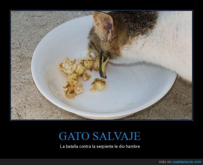 comiendo,gato,serpiente,wtf