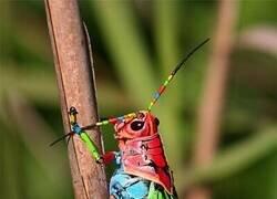 Enlace a Insecto colorido