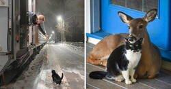 Enlace a Imágenes de gatos que te alegrarán el corazón