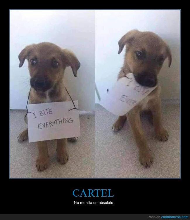 cartel,morder,perro