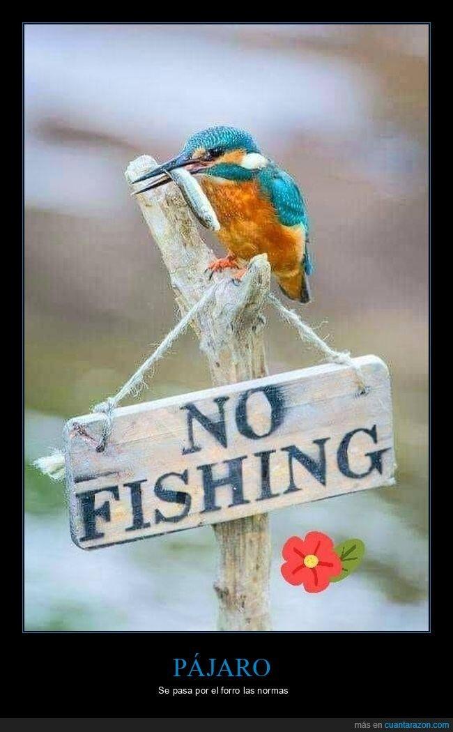 cartel,pájaro,pescar,pez,prohibición