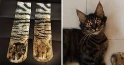 Enlace a Un padre compra unos calcetines que parecen patas de gato y su hija comparte la divertida reacción del gato que se vuelve viral