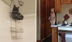 """Enlace a Dueños comparten fotos de sus gatos """"rotos"""""""