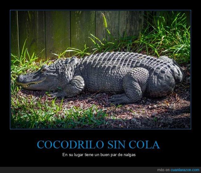 cocodrilo,cola,culo,wtf