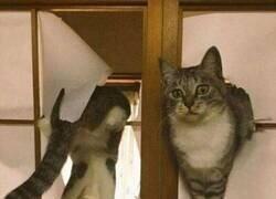 Enlace a Estas puertas no son compatibles con los gatos