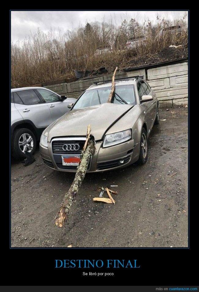coches,fails,tronco