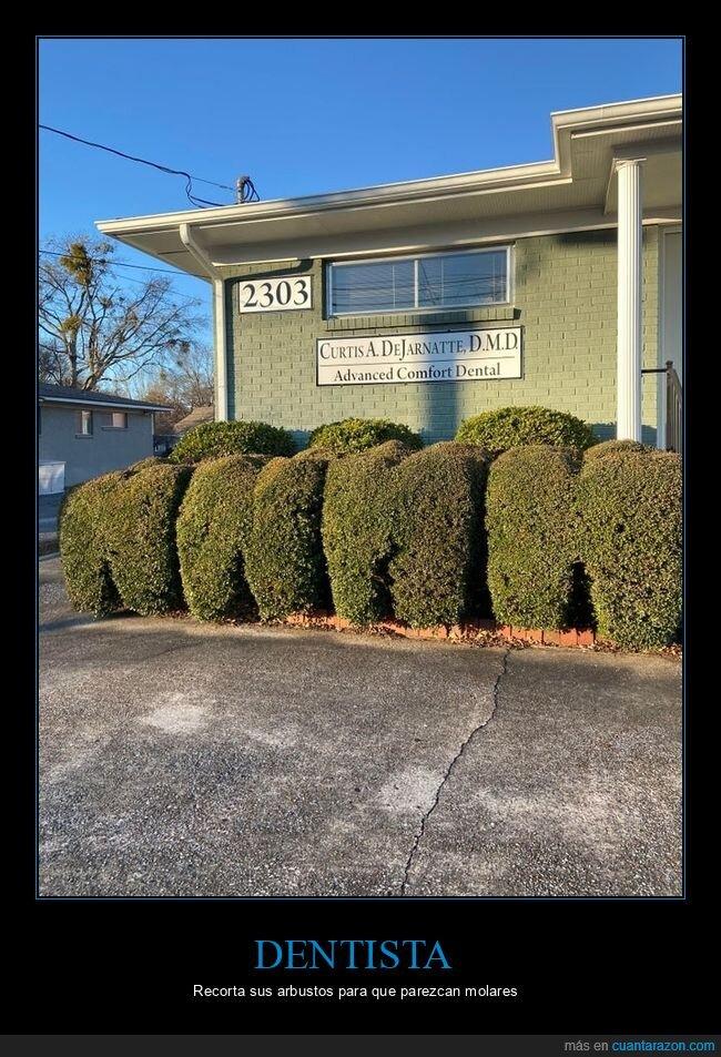 arbustos,dentista,muelas