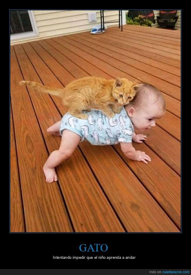 andar,gato,niño