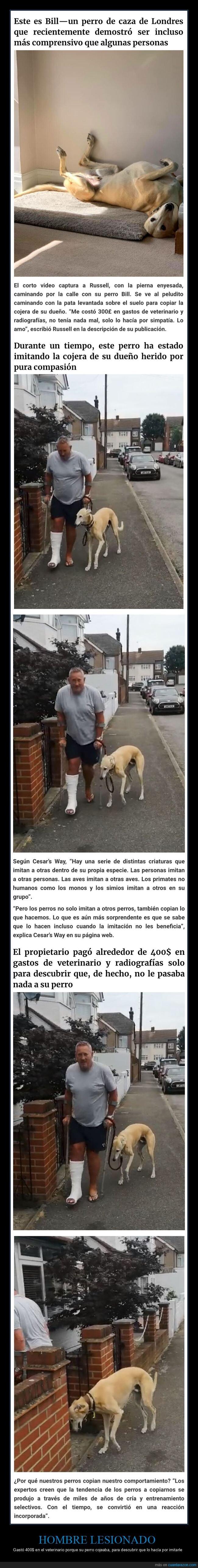 cojera,lesionado,perros