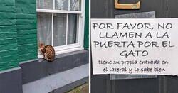Enlace a Gatos tan audaces que sus dueños tuvieron que poner carteles para avisar a los demás