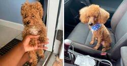 Enlace a Personas que llevaron sus perros a la peluquería y creyeron que les devolvieron al perro equivocado