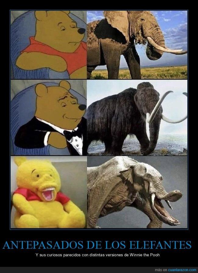 elefante,mamut,platybelodon,winnie the pooh