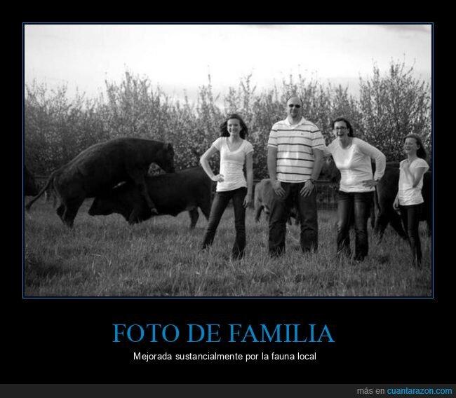 foto,vacas,wtf