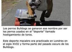 Enlace a La historia perturbadora de por qué los perros Bulldog tienen ese nombre