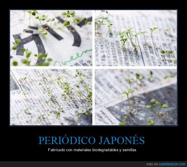periódico,semillas