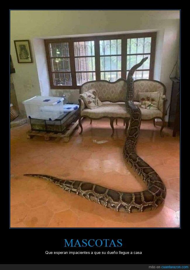 casa,mirando,serpiente,ventana,wtf