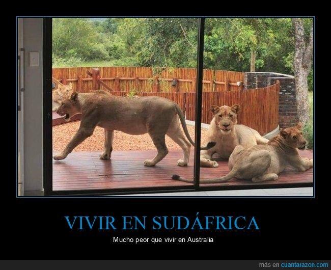 casa,leones,sudáfrica,wtf