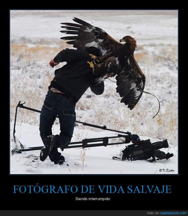 águila,fails,fotógrafo