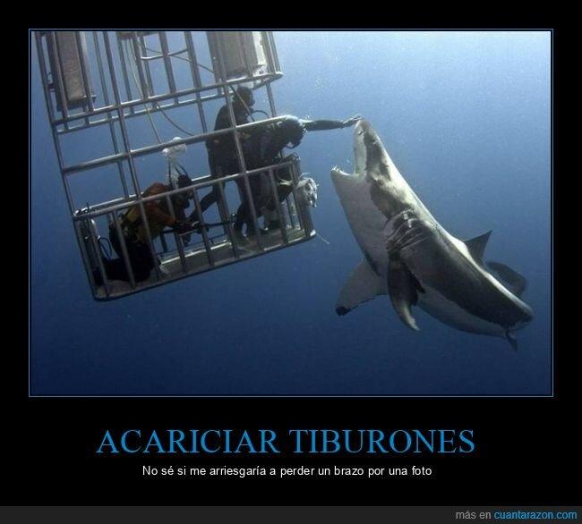 acariciando,tiburón,wtf