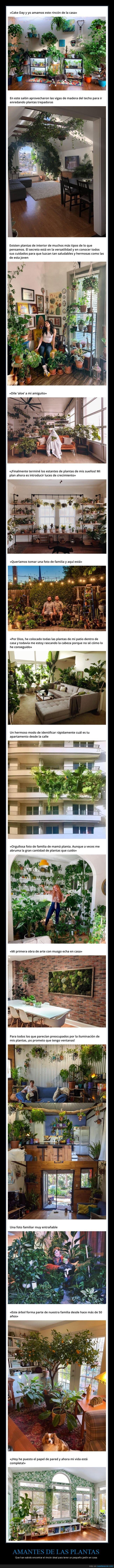 casas,jardines,plantas