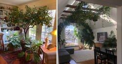 Enlace a Amantes de las plantas que han sabido encontrar el rincón ideal para tener un pequeño jardín en casa