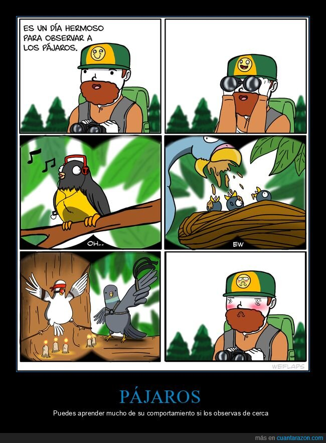 observar,pájaros