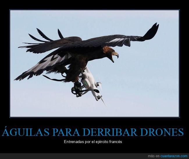 águilas,drones,ejército,entrenadas
