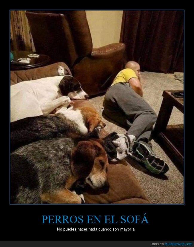 perros,sofá,suelo