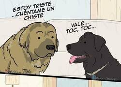 Enlace a Chiste perruno