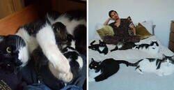 Enlace a Este chico sin gatos encontró 5 de ellos en su cuarto, y ha publicado una actualización tras 2 años con su familia gatuna