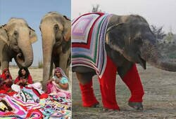 Enlace a Elefantes a la moda