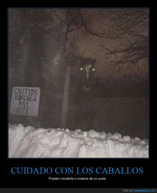 caballo,cartel,miedo,wtf