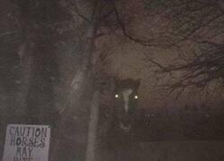 Enlace a Caballo terrorífico
