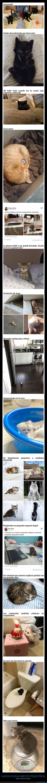 gatos,pequeños