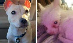 Enlace a Fotos de adopciones de mascotas más reconfortantes del mes de Enero