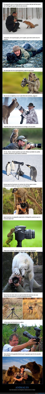 animales,fotógrafos,interrumpir