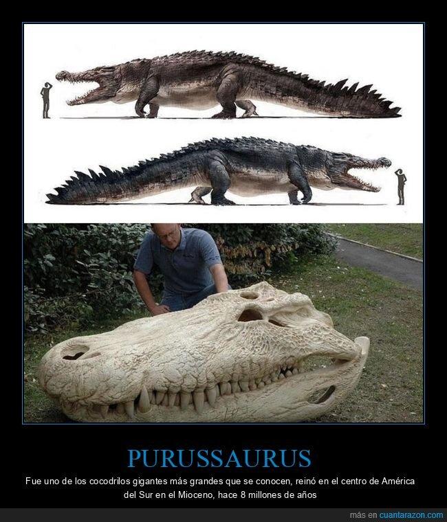 cocodrilo,curiosidades,gigante,purussaurus