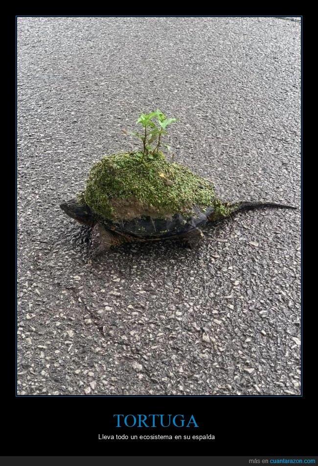 ecosistema,tortuga,wtf