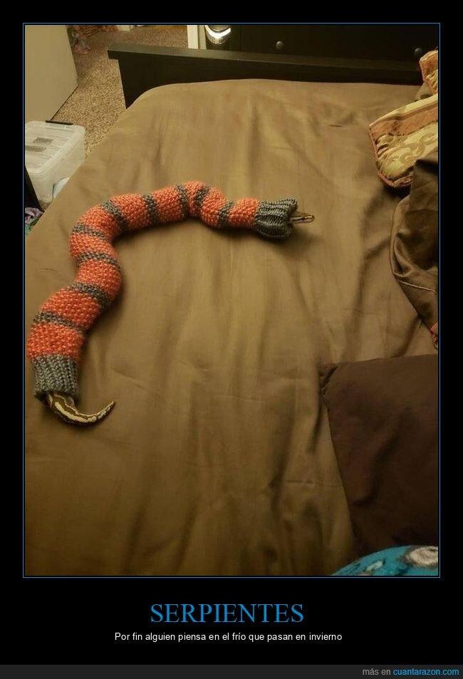 jersey,serpiente,wtf