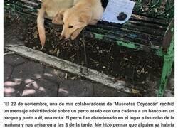 Enlace a Un niño dejó a este cachorro atado en un banco del parque con una nota desgarradora porque sus padres maltrataban al perro