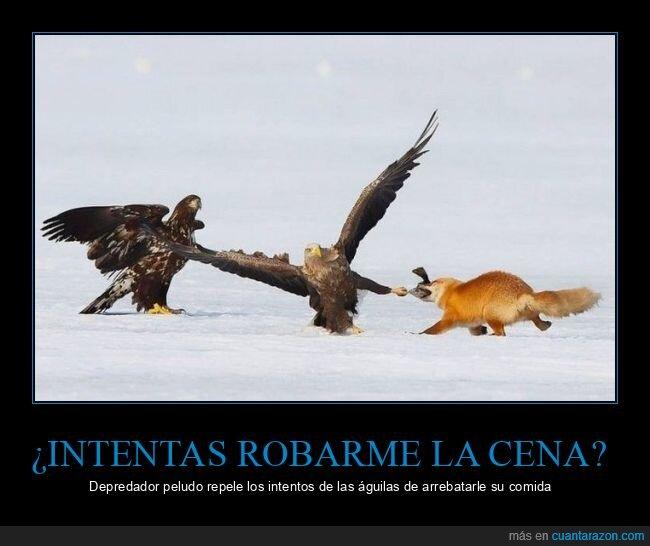 águilas,pez,zorro