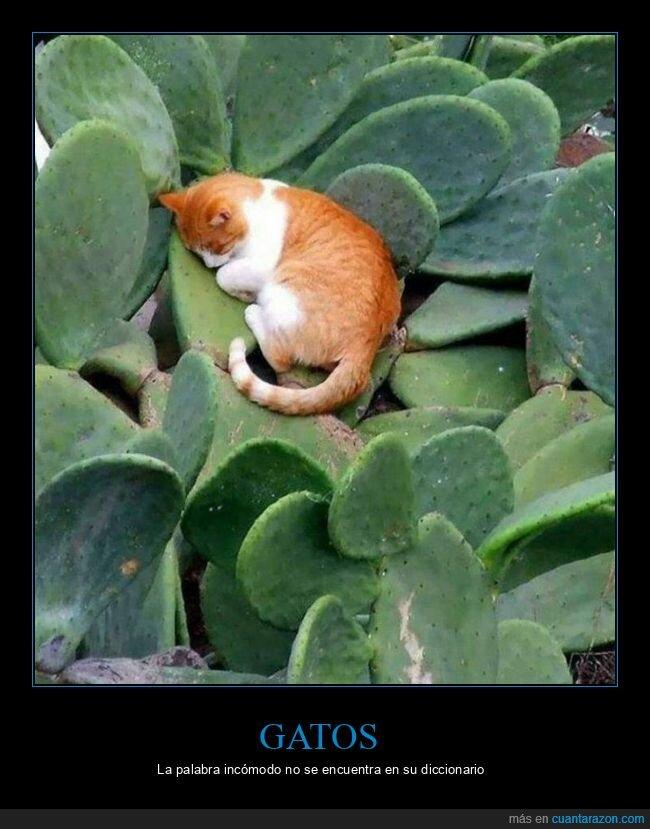 cactus,durmiendo,gato
