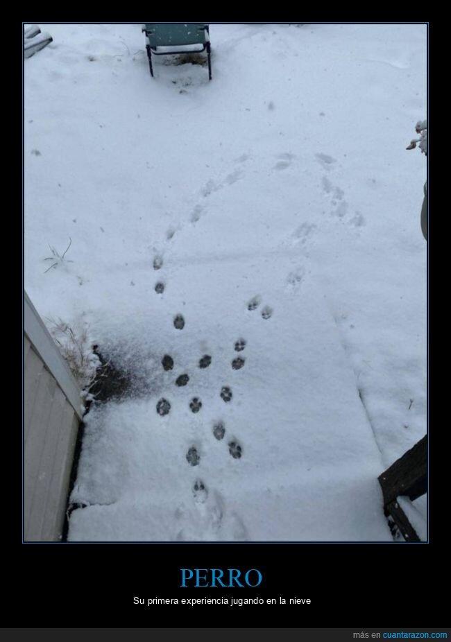 huellas,nieve,perro