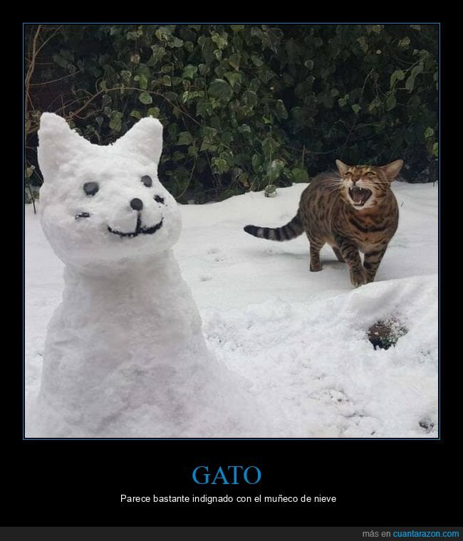 gato,muñeco de nieve