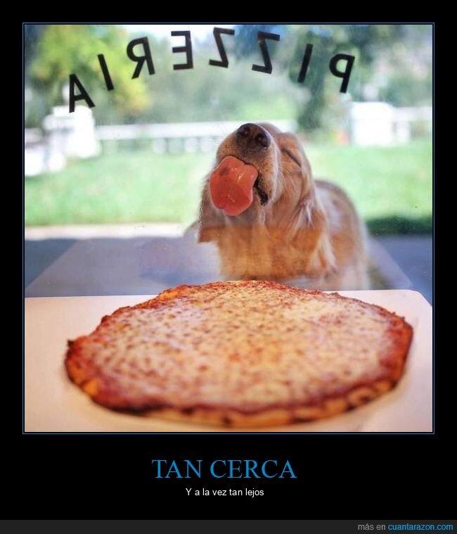 cristal,perro,pizza