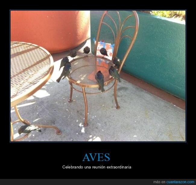 pájaros,silla,wtf