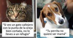 Enlace a Veterinarios comparten información que todos los dueños de mascotas deberían saber
