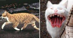 Enlace a Imágenes surrealistas donde los protagonistas son los gatos