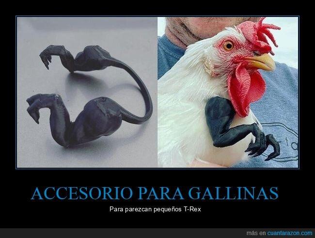 accesorio,gallina,tiranosaurio rex